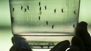 Advierten alza de Chikungunya con calor
