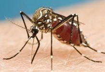 Atacará Zika con fuerza en primeros meses de 2017