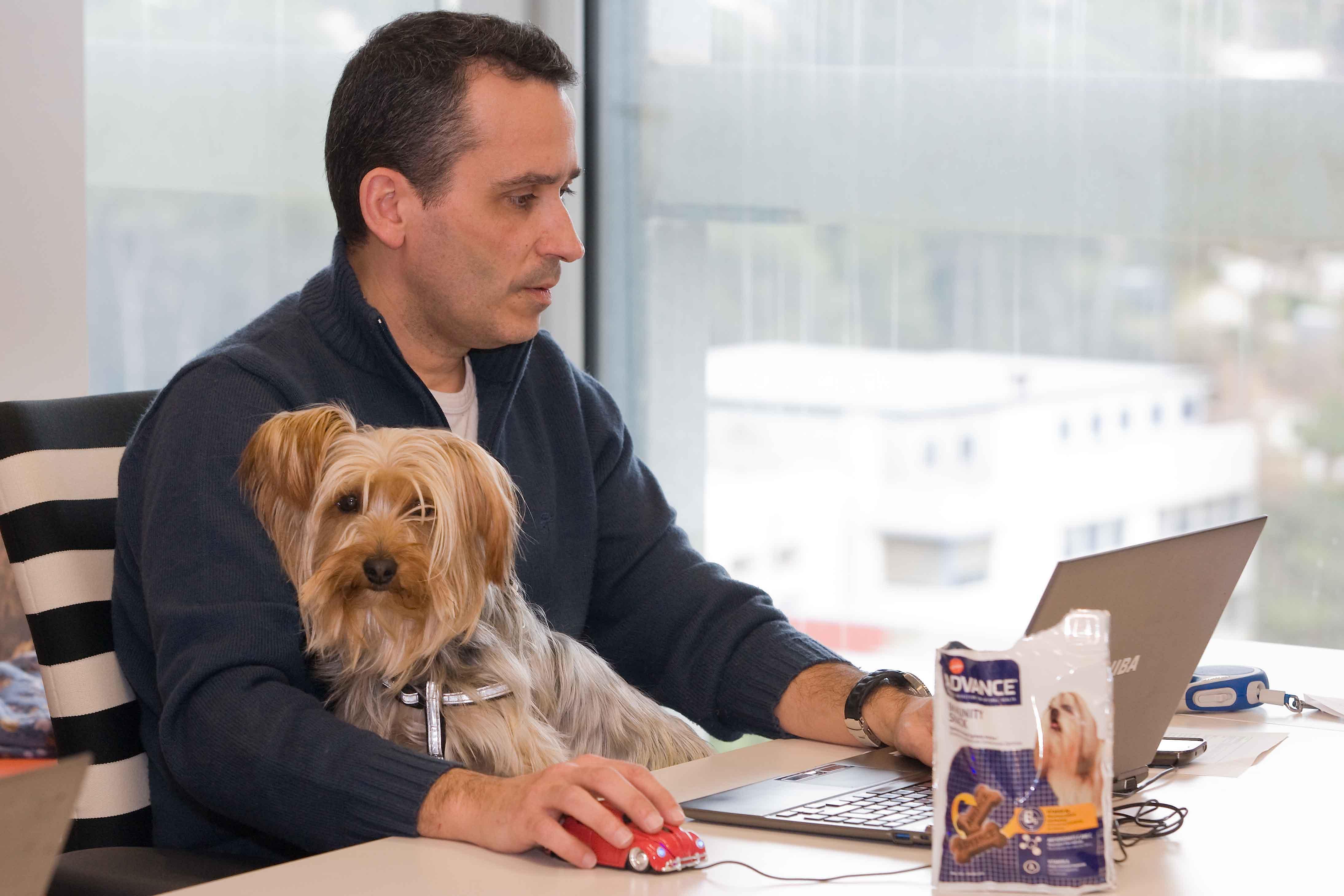 Beneficios de permitir mascotas en el trabajo