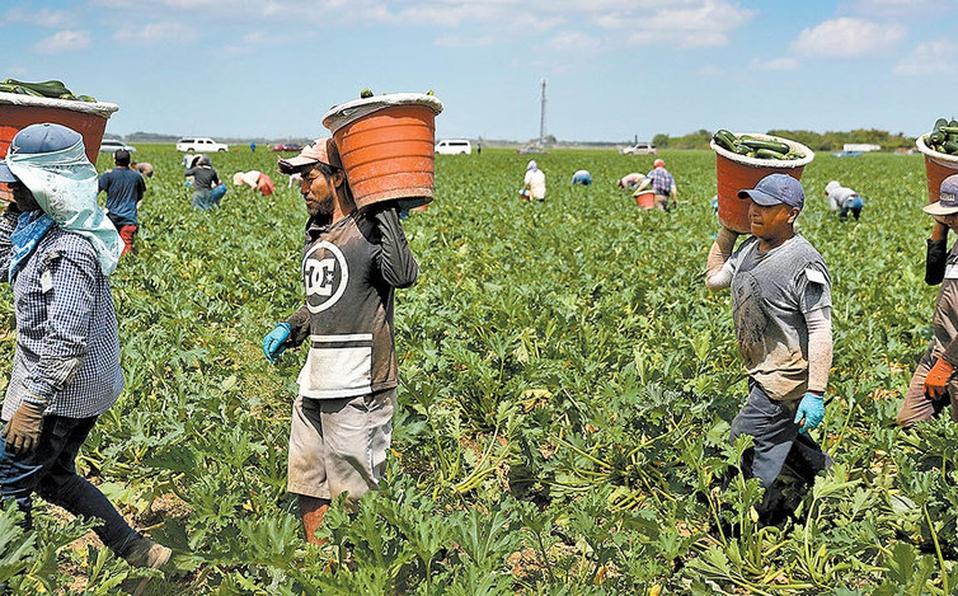 México suspende envío de trabajadores agrícolas a Canadá tras muertes