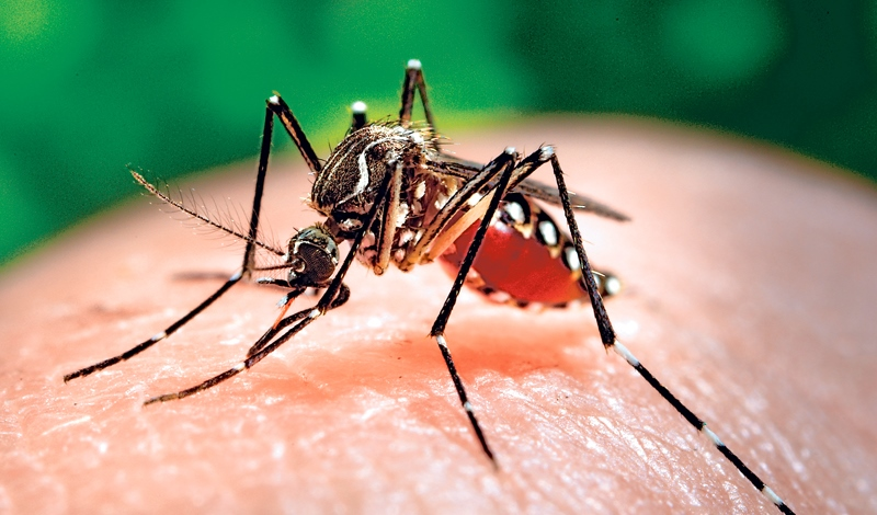 Suman 5,854 casos de zika en México: Ssa