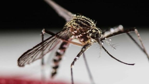 Virus del Zika llegó a 33 países en AL: OMS